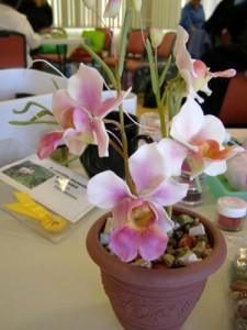 Papiolanthe orchid