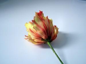 Parrot tulip workshop