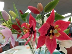 Nomocharis lily