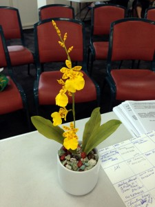"Oncidium ""dancing lady"" orchid"