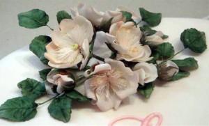 Mulgoa rose